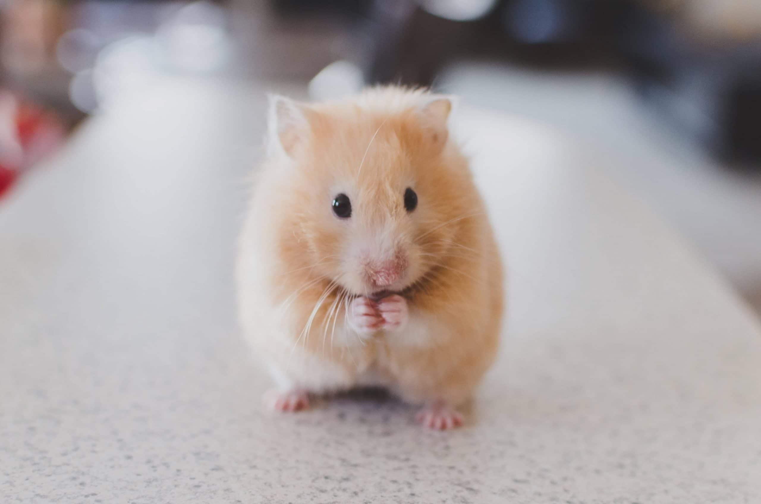 muis wel of niet